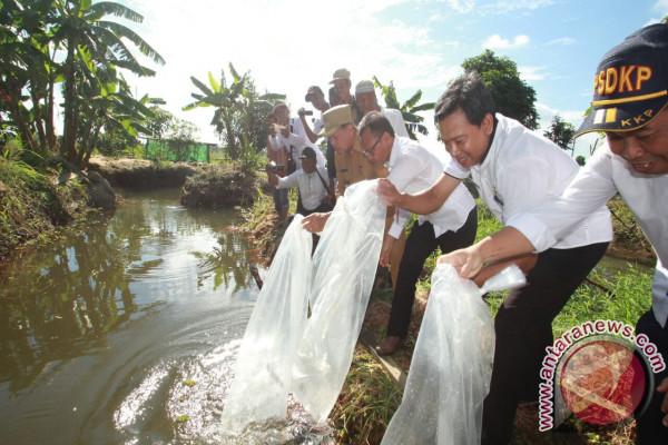 Tapin Kembangkan Sentral ikan Lokal di CLS