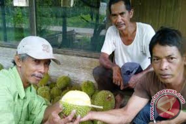 DPRD: Desa Bi`ih Jadi Wisata Durian Banjar