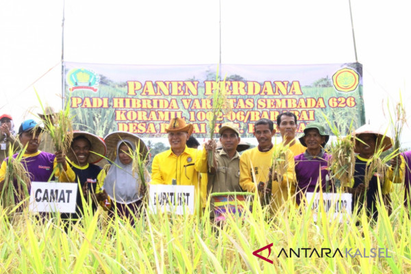 Sembada 626 Rice Planting Successful in HST