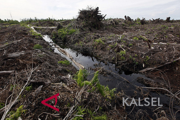 Canals blocks for peat restoration in Tabalong