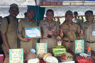 Durian Gentong Kalahkan 98 Durian Pada Kontes Durian