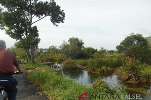 Banjar Mengoptimalkan Lahan Rawa Lebak 500 Hektare
