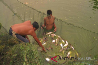 30 petani Batola dilatih membuat pakan ikan