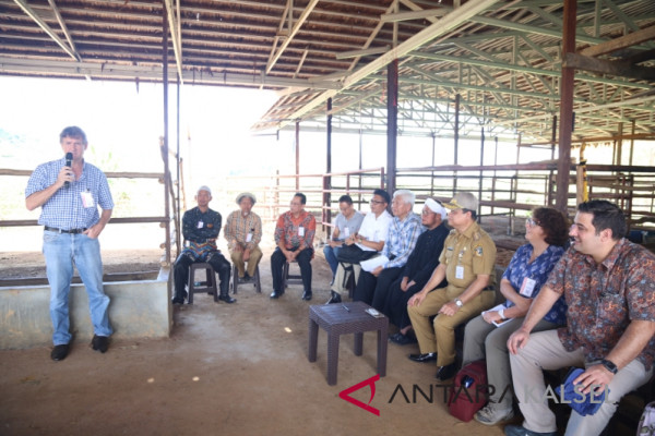 Australian Embassy staffs visit cattle breeding in Tanah Laut