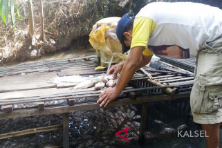 Video - Kematian Ribuan Ikan Petani Keramba Tidak Terindikasi Penyakit