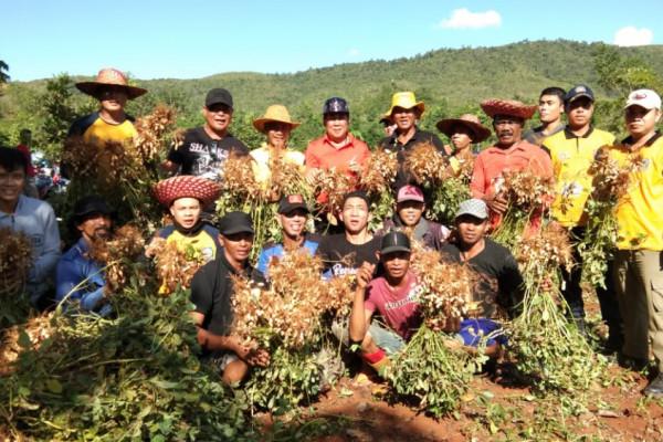 Beans harvest in Kiram tourism park