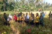 Koramil 1003-04  laksanakan intruksi Dandim Kandangan dampingi petani