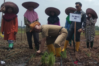 Perluasan lahan pertanian daerah rawa menjadi prioritas