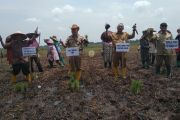Distan HST Target Tanam Padi 62.372 Hektare