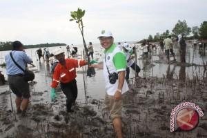 KPC Tanam Tiga Ribu Pohon Mangrove