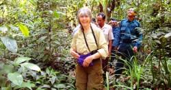 Interaksi Manusia Bisa Jadi Hambatan Pelestarian Orangutan
