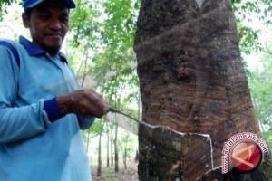 Kaltim Remajakan 100 Hektare Tanaman Karet