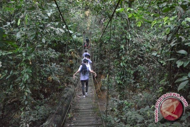 Kondisi Hutan TNK Sangat Mengkhawatirkan Akibat Perambahan