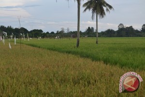 Paser Dapat Pengembangan Lahan Pangan 7.075 Hektare