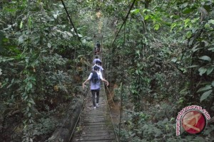 Restorasi Hutan Perlu Kemitraan Multipihak