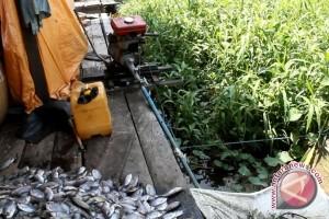 Mesin Perahu Jadi Alat Penyisik Ikan