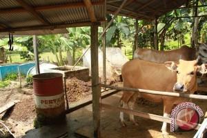 Dua Kampung di Kutai Barat Ingin Jadi Sentra Sapi