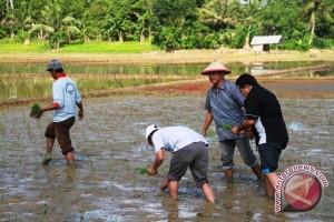 Kementan Usulkan 7.684 Penyuluh Pertanian Diangkat CPNS