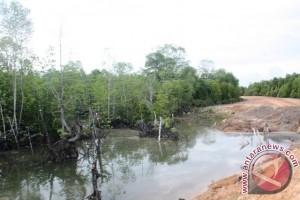 Puluhan Ribu Tanaman Mangrove Terancam Hilang