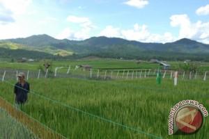 Kaltim Optimalkan Hasil Pertanian Melalui Pendanaan APBN