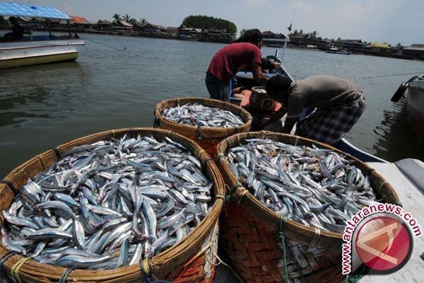Harga Ikan Laut di Penajam Melonjak
