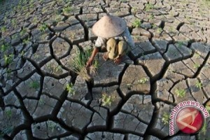 BPBD Paser Pantau Desa Rawan Kekeringan