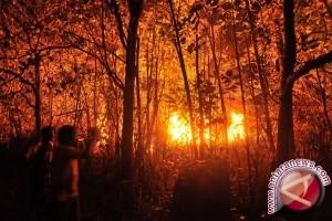 1.000 Hektare Hutan Lindung Sungai Wain Terbakar