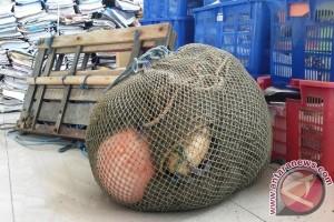 Penggunaan Jaring Cantrang masih Marak di Penajam