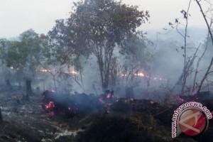 Aktivis: Kementerian LHK Tak Serius Tuntut Pembakar Lahan