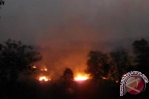 BPBD Kutai Deteksi Tiga Lokasi Kebakaran Lahan