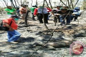 Tiga Orangutan Mati Akibat Kebakaran Lahan
