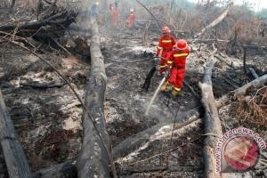 Kebakaran Hanguskan 100 Hektare Lahan di Kutai Timur