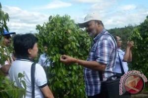 Peserta 5th IPC Kunjungi Kebun Lada