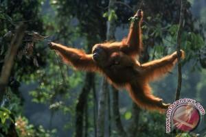 Lindungi Flora Fauna dan Kekayaan Alam Kaltim