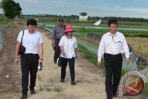 Investor Jepang Tinjau Lokasi Pertanian di Penajam