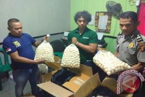 Profauna Apresiasi Pengungkapan Pencurian 4.600 Telur Penyu