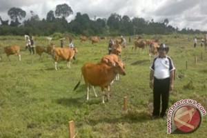 Lahan Ratusan Hektar untuk Kawasan Penggembalaan