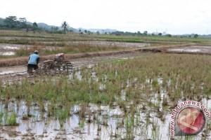 Potensi Cetak Sawah Kaltim 220 Ribu Hektare