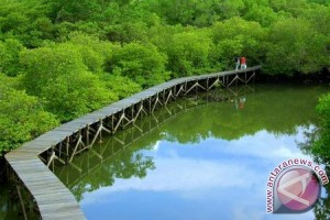 Pengembangan Ekowisata Hutan Bakau Penajam Terkendala Anggaran