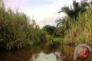 GMSS-SKM: Menurap Sungai Ibarat Ciptakan Balapan Liar