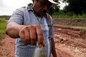 Ahli: Rawa Sungai Bisa Hasilkan Pangan Berkelanjutan
