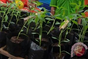 Bank Indonesia Libatkan TNI Bertanam Cabai