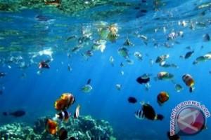 KLHK-UNDP Terbitkan Buku Fotografi Taman Laut Nasional