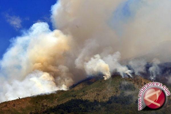 Puluhan hektare lahan gambut di Penajam kembali terbakar