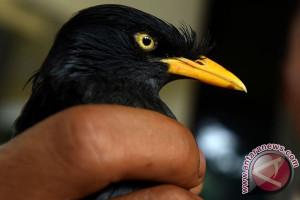 BKSDA Kaltim Gagalkan Pengiriman Ratusan Burung ke Sulawesi