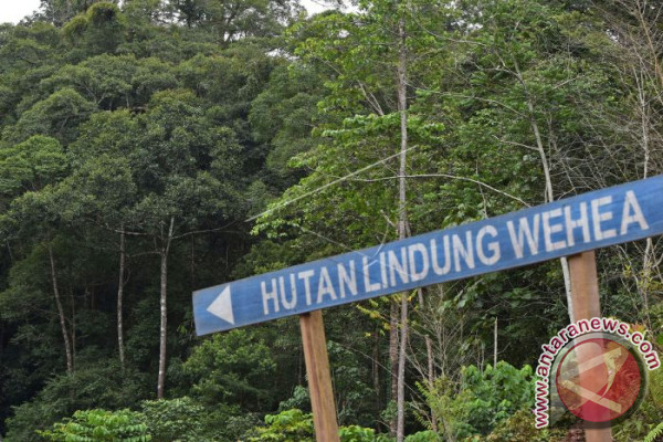 Sembilan lembaga donor bantu masyarakat adat pulihkan hutan