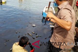 Perairan Balikpapan kembali tercemar minyak