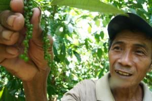 Harga Lada di Lampung Timur  Bertahan Tinggi