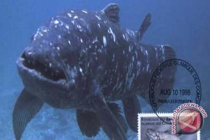 """Ikan raja laut coelacanth dengan nama """"latin latimeria manadoensis"""