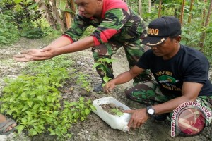 Prajurit TNI Dikerahkan Antisipasi Krisis Cabai Manokwari